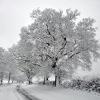 Snow-covered trees, Parish Lane, Pease Pottage